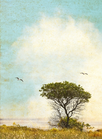 pleasing: An oak tree along the California coast with ocean fog in the background   Image done in vintage colors with pleasing grunge textures and paper grain