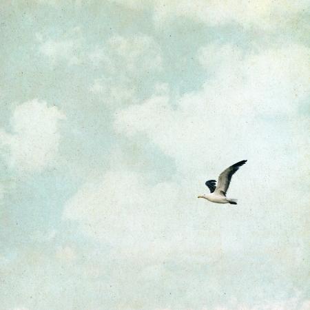 gaviota: Una gaviota y las nubes sobre un fondo de papel de época grunge con texturas y granos
