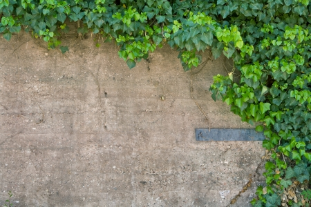 An old cement and concrete wall with ivy growing on it