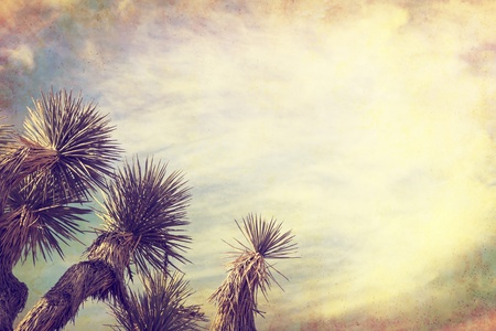 A Joshua tree in California s Mojave desert   Image is done in a retro, vintage style with cross-processed colors and grunge paper textures