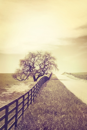 A fence and old oak tree along an empty country road.  Image is done in a retro style with cross-processed colors.
