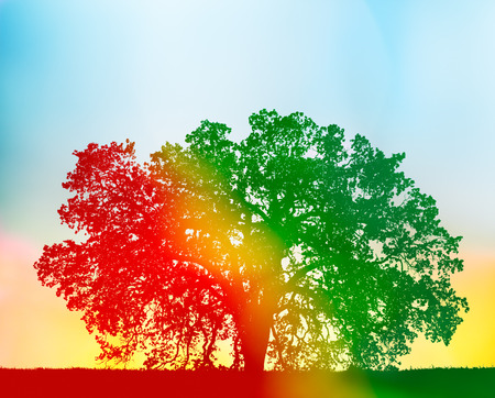 A California oak tree with a red to green gradient silhouette and yellow flare added for a colorful, rainbow effect.