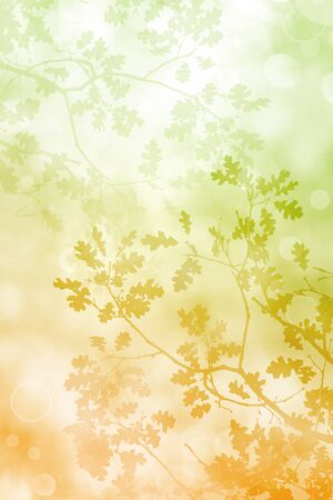 diffuse: A silhouette of fall leaves and tree branches with a pastel brown to green color gradient on a soft bokeh background.