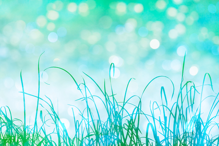 grass blades: Tall grass in green silhouette with sparkling bokeh light effects in the background. Stock Photo