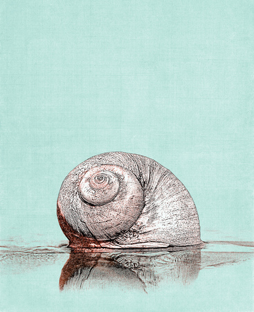 green lines: A moon snail seashell on a textured green cloth background. Stock Photo