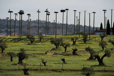 nests: many storks nests in Portugal Stock Photo