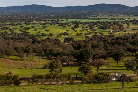 contryside: typical landscape in Extremadura, Spain Stock Photo