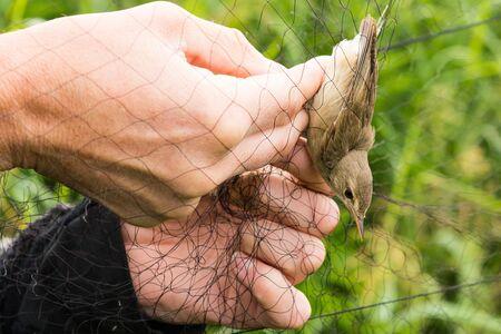 leer: bird ringing trackong in a net