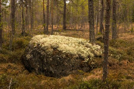 dosh: marshland and moorland in Sweden