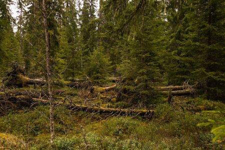 landscape format: marshland and moorland in Sweden