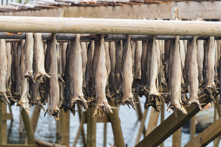 air dried: air dried cod and stockfish in Norway