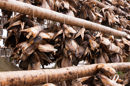 landscape format: air-dried cod and stockfish in Norway