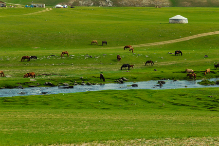 mongolian landscape with horses and yurts Stok Fotoğraf