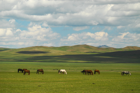distinctive: mongolian landscape with horses and yurts Stock Photo