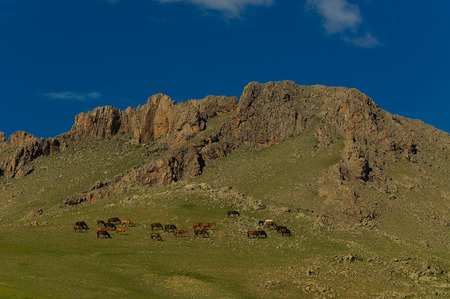 distinctive: mongolian landscape with horses