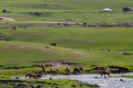 characteristic: Typical mongolian landscape and steppe Stock Photo