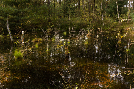 typical: View over a swamp and bog wetland