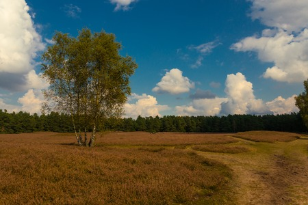typical Lueneburg Heath in the autum