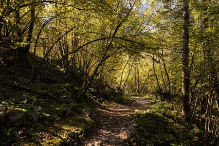 Autumn mood in the Triglav National Park, Tolmin, Goriska, Slovenia, Europe Stock Photo