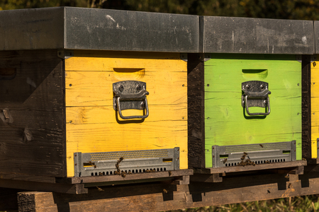 Bee box with bees in autumn, beehive, Dolomites, Alps, Italy