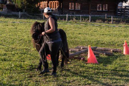 Oct. 2018, Frutigen-Niedersimmental, switzerland, horse logging with small horses ponies pony Editorial