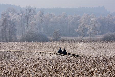 Walkers on jetty in winter, hoarfrost, nature reserve Federsee, Bad Buchau, Baden-Wurttemberg, Germany
