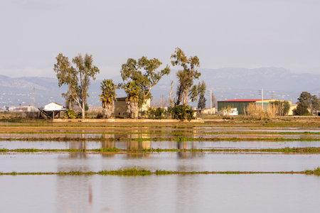 Delta Ebro, Natural park, Tarragona, Catalonia, Spain, Jan 2020: Rice fields after harvest still flooded with traditional farmhouse landscape, Delta river Ebro, Tarragona, Spain