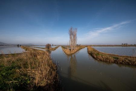 Delta Ebro, Natural park, Tarragona, Catalonia, Spain, Jan 2020: Rice fields with traditional farmhouse landscape, Delta river Ebro, Tarragona Spain