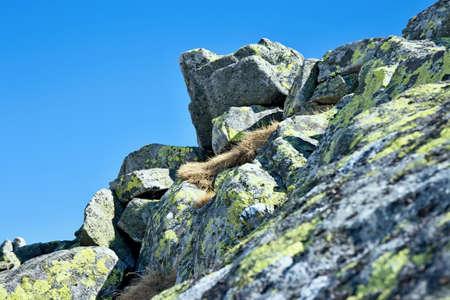 in low spirits: Stones on the top of Chopok in Low Tatras.
