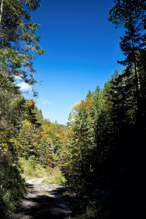 ruzomberok: Ruzomberok - Cutkovska valley - walk through the valley with the surrounding nature.