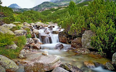 The water of a mountain river with rocks and dwarf-pine near the waterfall Skok in the High Tatras. Beautiful Slovakia.