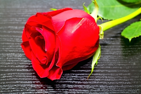 The rose will always please the heart of the woman.