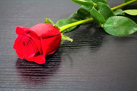 Red rose is a gift for every occasion. The rose will always please the heart of the woman.
