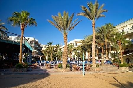 Sunbeds and Palm trees at the beach preparing for visitors. Egyptian holiday.