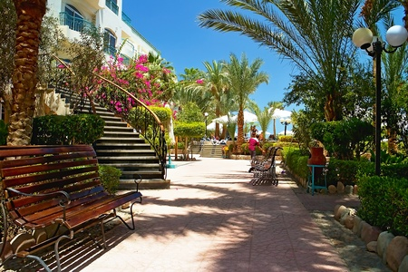 Walking path with ornamental trees and benches in the Egyptian Resorte in Hurghada. Flowering blossoms and palm trees.