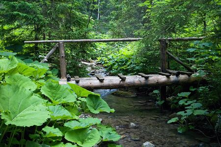 A small wooden bridge over the Ilanovka mountain stream in Liptov.