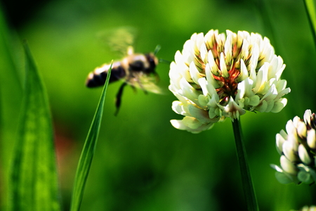 bee on flower: Flower and Bee