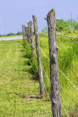 A row of wooden fence posts and barbed wire. photo