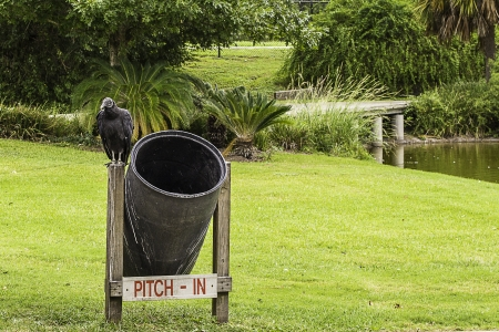 A vulture perched on top of a trash can in a park. Stock fotó