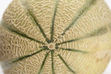 meshed: Close up of a galia melon skin showing different meshed structures