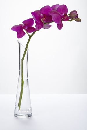 A purple orchid stands into a tall vase of glass filled half with water  Stock Photo