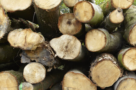 boles: A pile of logs (boles) is laying at the edge of a forest.