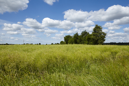cottonwool: Cultural landscape in Schleswig-Holstein (north Germany) with trees and bushes taken on a sunny day with a blue sky and white fleecy clouds. Stock Photo