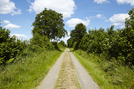 cottonwool: A cultural landscape in Schleswig Holstein (Germany) with a farm lane and trees under a blue sky with white fleecy clouds taken at full sunlight.