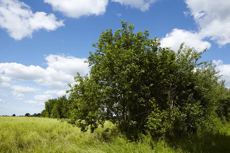 Cultural landscape in Schleswig-Holstein (north Germany) with trees and bushes taken on a sunny day with a blue sky and white fleecy clouds. Stock Photo