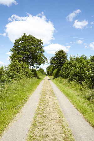 A cultural landscape in Schleswig Holstein (Germany) with a farm lane and trees under a blue sky with white fleecy clouds taken at full sunlight.
