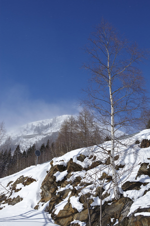 birch tree: A winter landscape with a birch tree taken at the Swiss canton Ticino (Tessin) near the Gotthard massif. Stock Photo