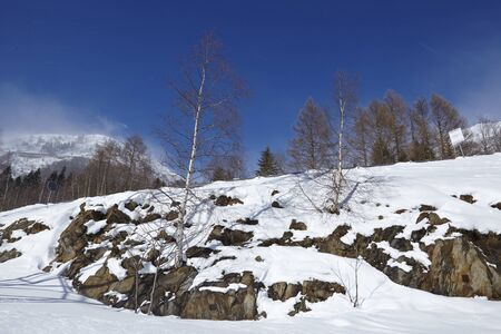 massif: A winter landscape with a birch tree taken at the Swiss canton Ticino (Tessin) near the Gotthard massif. Stock Photo