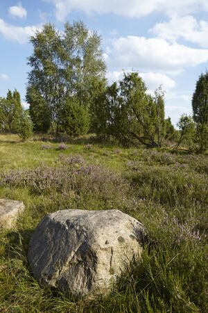sustainable tourism: A stone rock lays in the heathland (landscape() of the Luneburg Heath (Germany) near the small town Wilsede (Lower Saxony, Rural District Harburg).