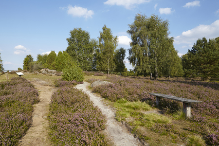sustainable tourism: A bench stands beneath a small path that leads through the heathland (landscape) of the Luneburg Heath (Germany) near the small town Wilsede (Lower Saxony, Rural District Harburg).